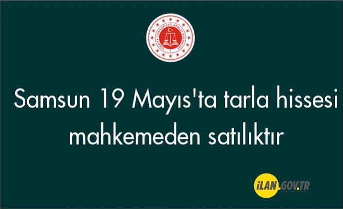 Samsun 19 Mayıs'ta tarla hissesi mahkemeden satılıktır