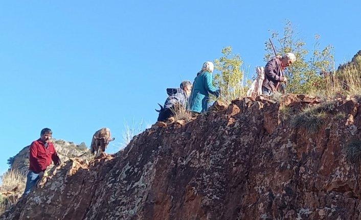 Artvin'de kayalıklarda mahsur kalan keçileri AFAD gönüllüleri kurtardı