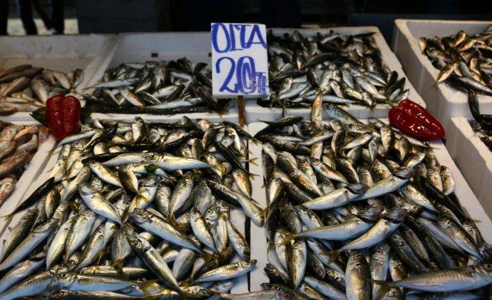 Av yasağının sona ermesiyle Trabzon'daki balık tezgahları istavritle şenlendi