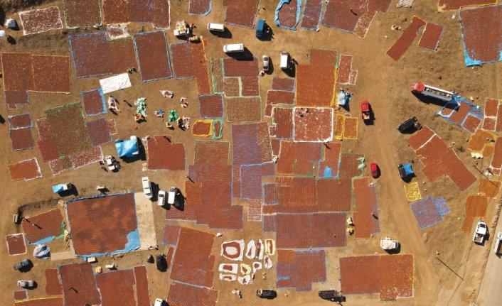 Giresun'un Şebinkarahisar ilçesi, fındığını kurutmaya çalışan üreticilerin akınına uğradı