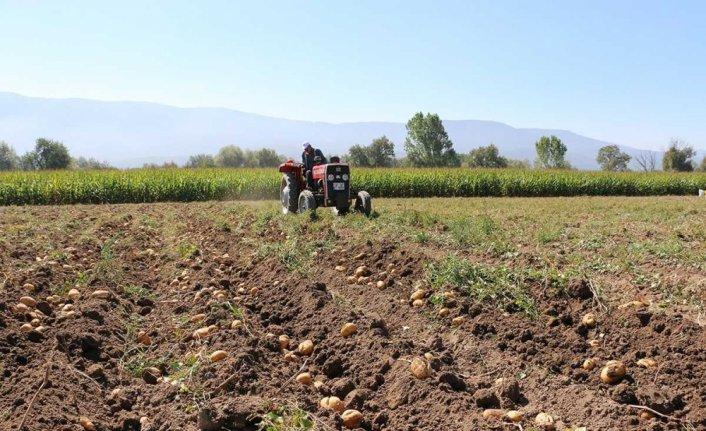 Hasadına başlanan Bolu patatesinde dekar başına 2-4 ton rekolte bekleniyor