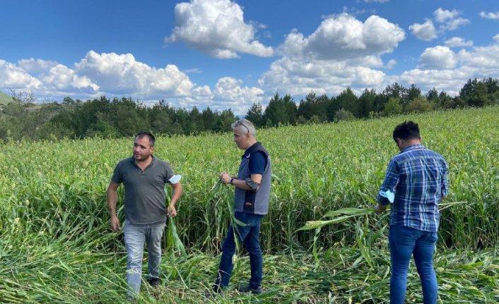 Karabük'te hasadına başlanan şeker sorgumu verimi ve kalitesiyle çiftçinin yüzünü güldürdü