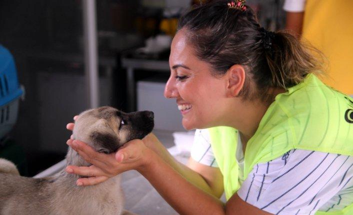 Ses sanatçısı 15 gündür sel bölgesinde sokak hayvanları için çalışıyor
