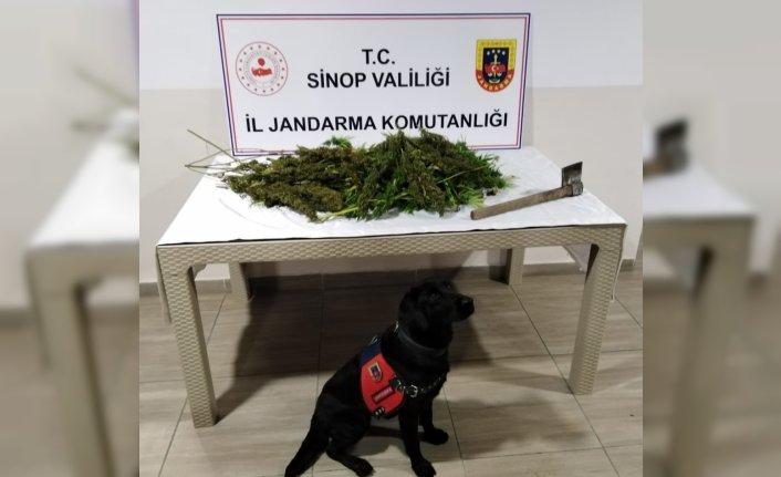 Sinop'ta uyuşturucu operasyonunda 2 şüpheli yakalandı