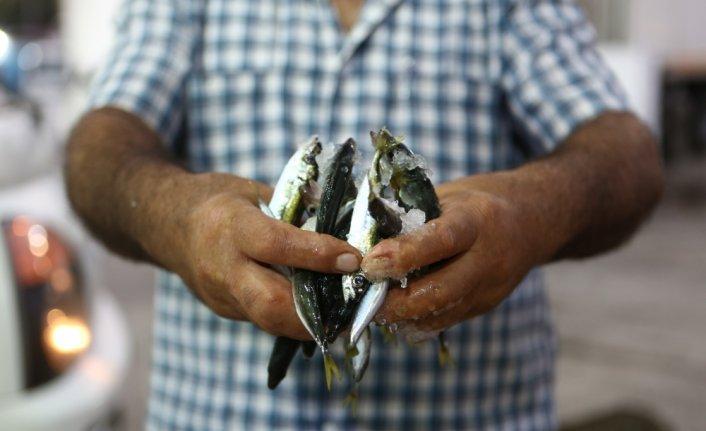 Trabzon'da balıkçılar av sezonunun ilk gününde bol miktarda istavritle kıyıya döndü