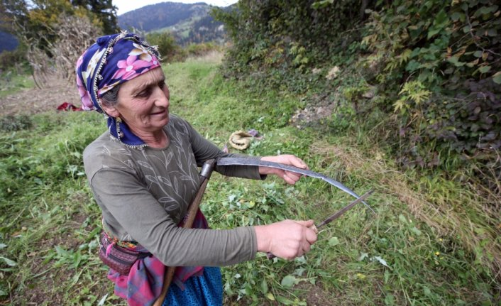 """Doğu Karadeniz'in çalışkan kadınları """"güz"""" telaşında"""