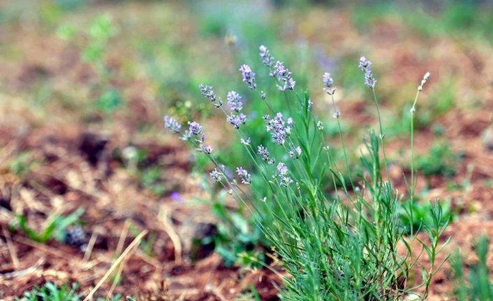 Karabük'te üretilecek bitkiler, birlik aracılığıyla tüketiciye ulaştırılacak