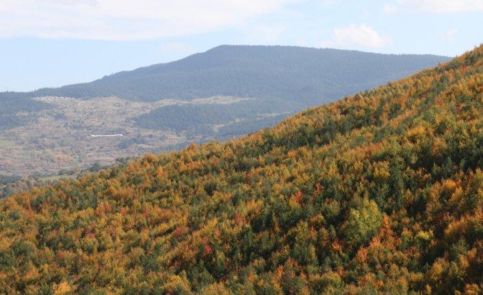 Mudurnu Dağları sonbahar renklerine büründü