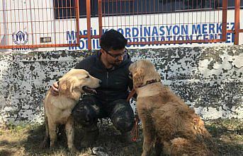 Ayancık'taki sel nedeniyle şantiyede mahsur kalan iki köpek iş makinesiyle kurtarıldı