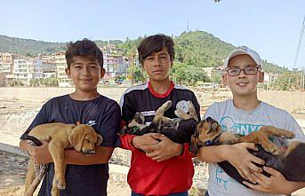 Sinop'ta selde anneleri kaybolan köpek yavrularına çocuklar sahip çıktı