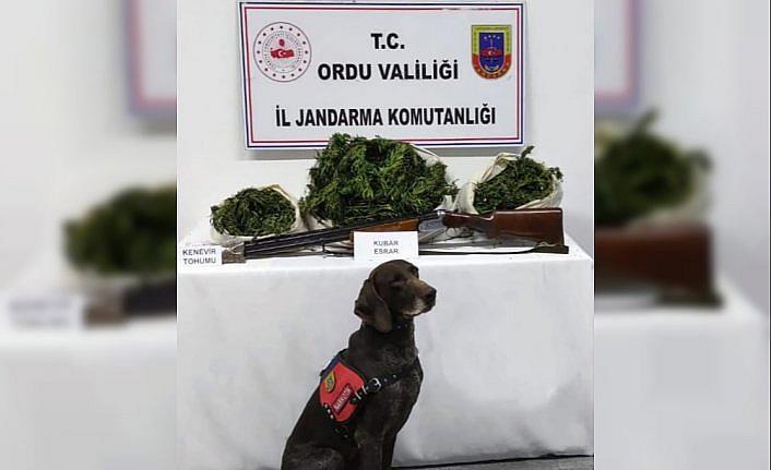 Ordu'da 12 kilo 350 gram esrar ele geçirildi