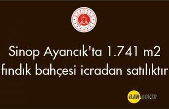Samsun Ayancık'ta 1.741 m2 fındık bahçesi icradan satılıktır