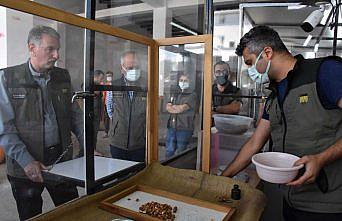 TMO Genel Müdürü Güldal, Ordu'da fındık alım noktasını ziyaret etti: