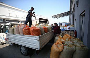 Serbest piyasada fındık fiyatlarının düşmesi üreticinin TMO'ya yönelimini artırdı