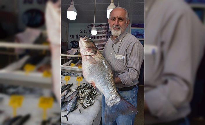 Balıkçılarda 11 kilogramlık levrek sevinci
