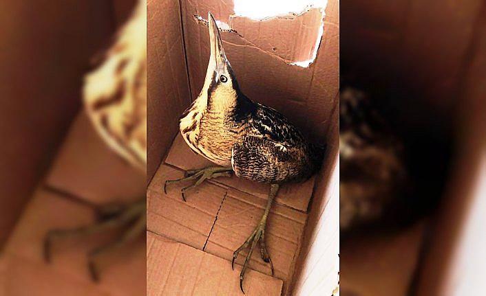 Yaralı balaban kuşu tedavisinin ardından doğaya bırakıldı