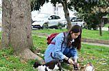 Sokak kedileri genç kızın adeta yolunu gözlüyor