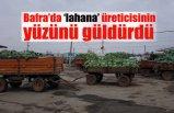 Bafra'da lahana, üreticisinin yüzünü güldürdü