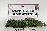 Kastamonu'da jandarmanın yol kontrolünde uyuşturucunun etkisinde olduğu belirlenen iki zanlı gözaltına alındı
