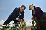 Kastamonu'da Taşköprü sarımsağının hasadına başlandı