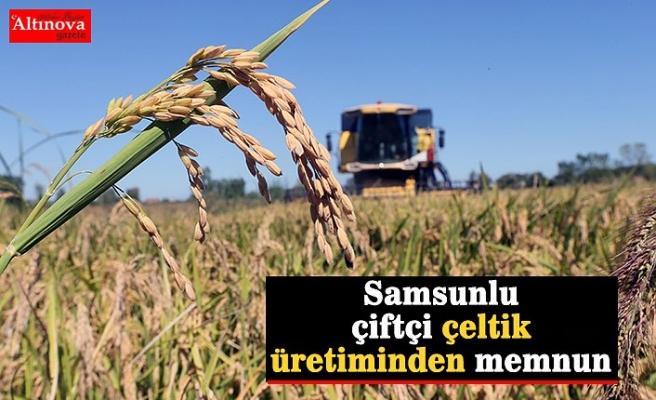 Samsunlu çiftçi çeltik üretiminden memnun