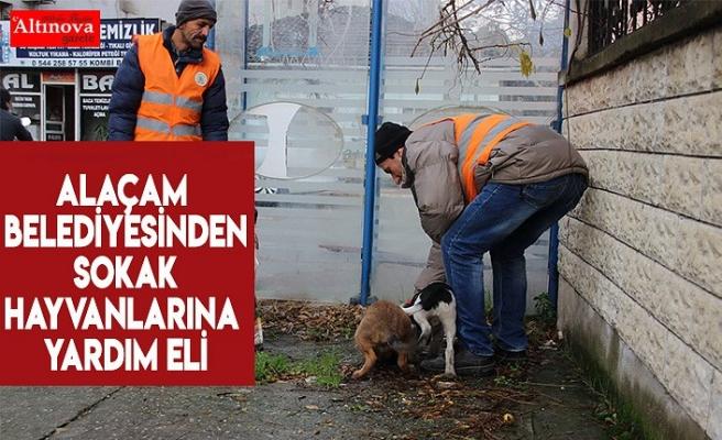 Alaçam Belediyesinden sokak hayvanlarına yardım eli