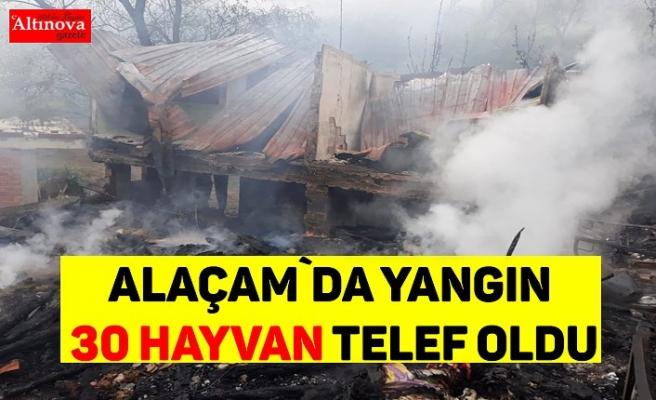 Alaçam`da yangın 30 hayvan telef oldu