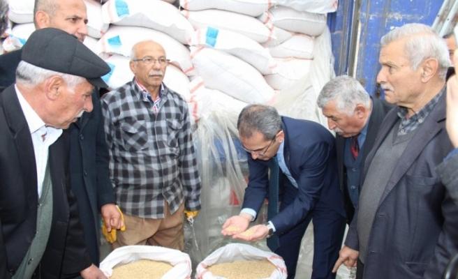 Tosya'da üreticilere çeltik tohumu dağıtıldı