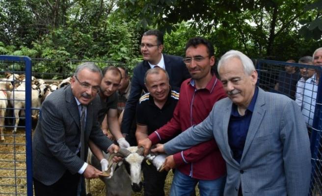 Ordu'da çiftçilere hayvancılık desteği