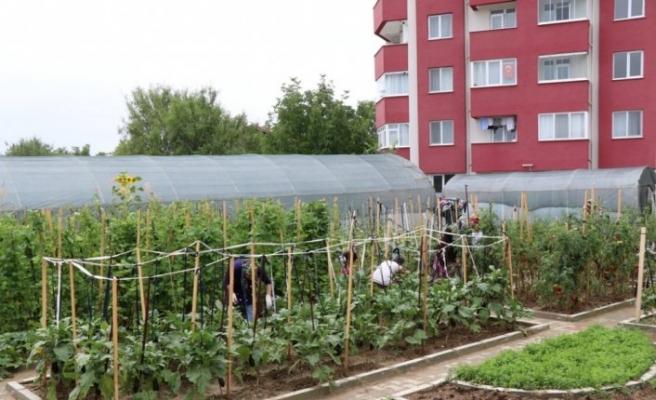 Safranbolu'da örtü altı sebze yetiştiriciliği kursu