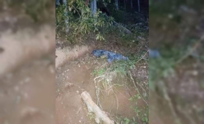 Üzerine ağaç devrilen orman işçisi öldü