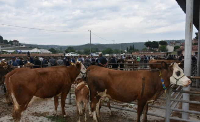 Boyabat'ta canlı hayvan pazarı 3 ay aradan sonra açıldı