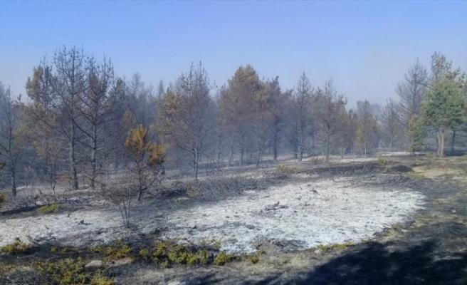 Ordu'da orman ve örtü yangını kontrol altına alındı