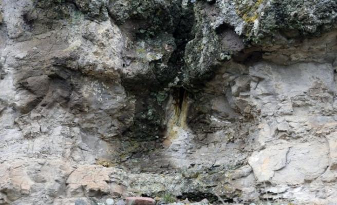 """Türkiye'nin ilk """"fosil ormanının"""" UNESCO Dünya Miras Listesi'ne alınması için çalışma başlatıldı"""