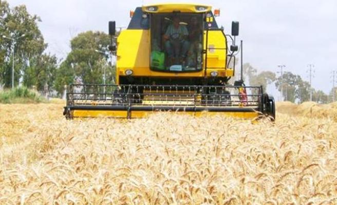 Bafra Ovası'nda Buğday Hasadına Başlandı