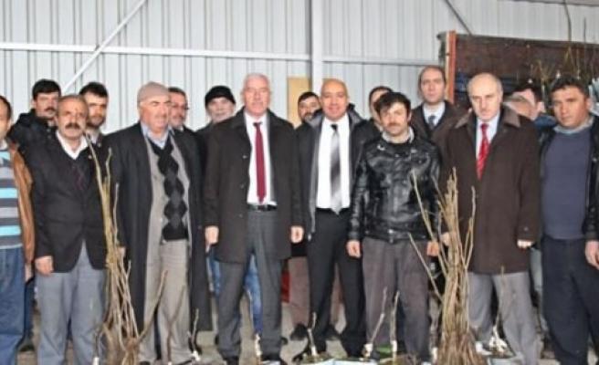 Alaçam da Çiftçilere Ücretsiz 1500 Ceviz Fidanı Dağıtıldı