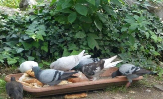Güvercinlerin Yardımına Vatandaşlar Koşuyor