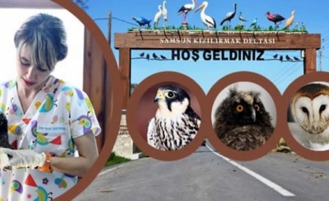 Kızılırmak Deltası'ndaki Klinikte 80 Göçmen Kuş Tedavi Edildi