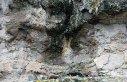 """Türkiye'nin ilk """"fosil ormanının"""" UNESCO..."""