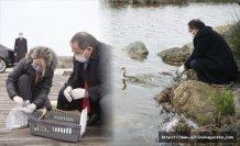 Yaralı 'Bahri' cinsi ördek sağlığına kavuşup doğaya salınırken, Kızılırmak Deltası'nda yeni bir kuş türü daha tespit edildi