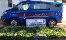Samsun'da uyuşturucu operasyonlarında 15 şüpheli yakalandı