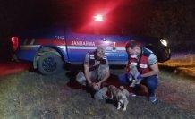 Tokat'ta jandarma ekipleri arazide bulduğu 6 köpek yavrusuna sahip çıktı
