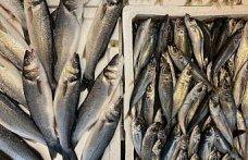 Denizlerde av yasağının başlamasının ardından Trabzon'da somon ve alabalık rağbet görüyor