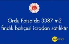 Ordu Fatsa'da 3387 m² fındık bahçesi icradan satılıktır