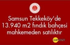 Samsun Tekkeköy'de 13.940 m2 fındık bahçesi mahkemeden satılıktır