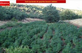 Diyarbakır'da 1 milyon 255 bin 464 kök Hint...