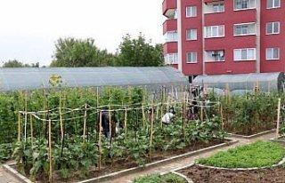 Safranbolu'da örtü altı sebze yetiştiriciliği...