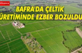 BAFRA'DA ÇELTİK ÜRETİMİNDE EZBER BOZULDU
