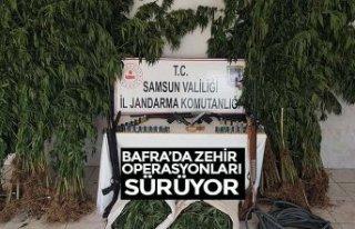 BAFRA'DA ZEHİR OPERASYONLARI SÜRÜYOR