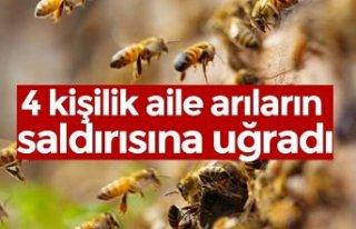 4 kişilik aile arıların saldırısına uğradı